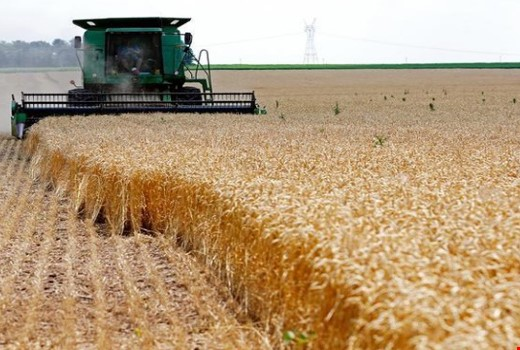 Iraq buys more than 4 million tons of wheat